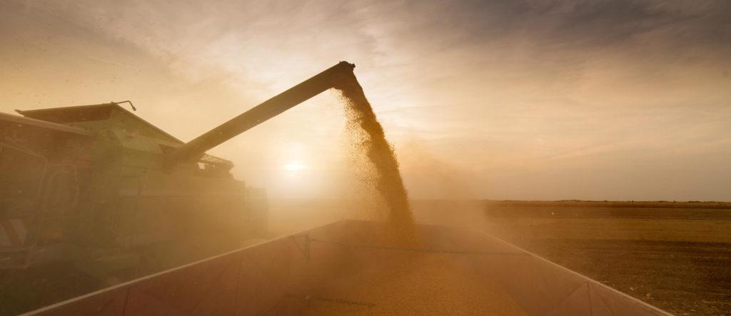 Vidange blé